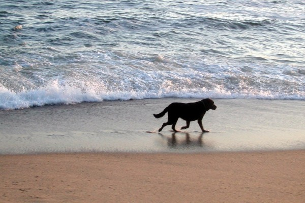 Perro en la orilla del mar