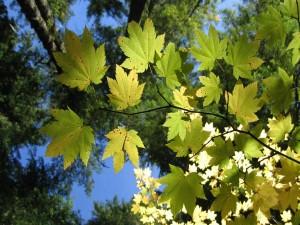 Las hojas de los árboles