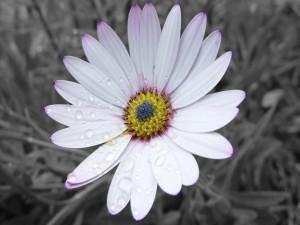 Flor con gotas de lluvia