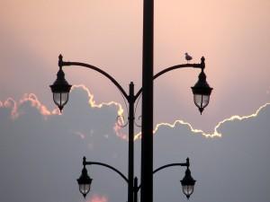 Pájaro sobre la farola