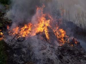 No quemes los bosques