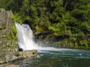 Postal: Vegetación cerca de la cascada