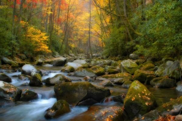 Bosque otoñal con un pequeño río