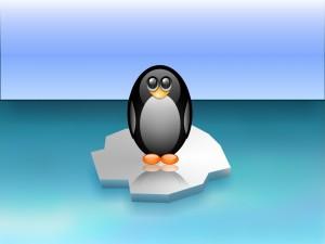 Postal: Pingüino sobre el hielo