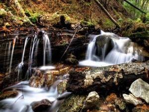 Postal: Troncos de árbol en el río