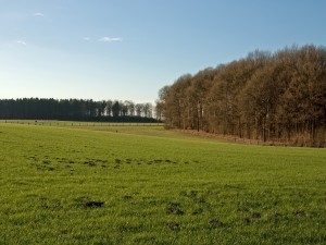 Postal: Verdes prados
