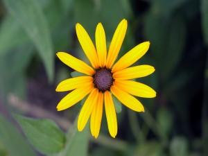 Postal: Flor amarilla solitaria