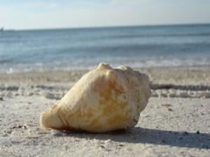 Una gran concha en la playa