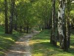 Árboles al borde del camino