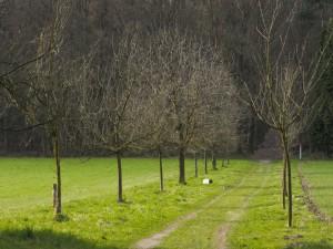 Pequeños árboles sin hojas