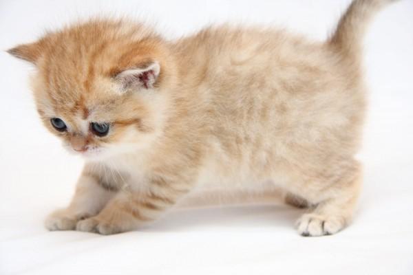 Gatito con los pelos de punta
