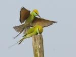 Pájaros verdes sobre un palo