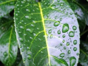 Postal: Hoja brillante con gotas de lluvia