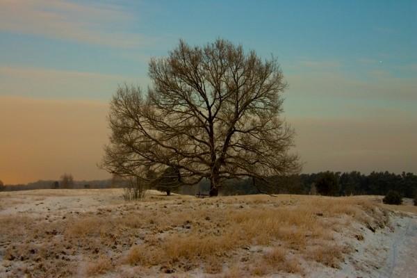 Árbol con ramas largas