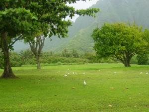 Pájaros blancos en la hierba