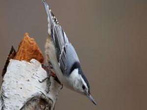 Postal: Pájaro sobre un tronco de árbol
