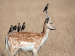 Pajaritos contemplando la naturaleza sobre un ciervo