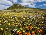 Campo de florecillas cerca de la montaña