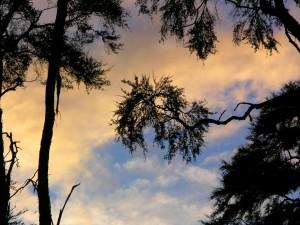 Postal: El cielo y árboles