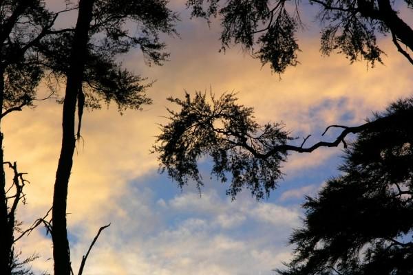 El cielo y árboles