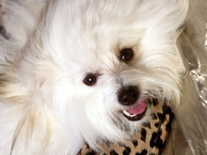 Un perro feliz