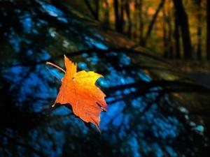 Postal: Hoja en otoño