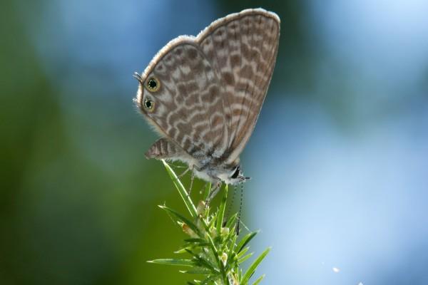 Mariposa sobre una rama con hojas verdes