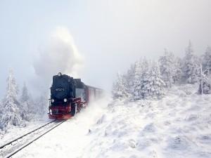 Postal: Tren atravesando pinos nevados