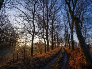 Postal: Camino en el campo rodeado de árboles sin hojas