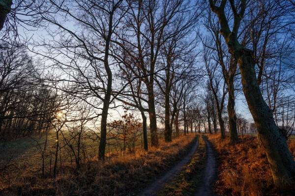 Camino en el campo rodeado de árboles sin hojas
