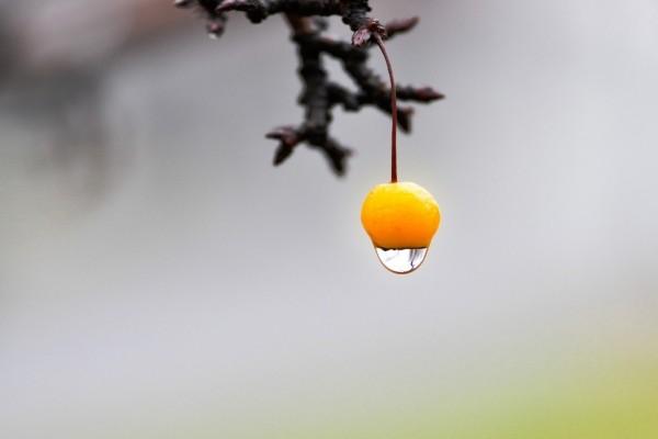 Gota de agua cayendo de un fruto naranja