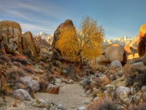 Postal: Árbol con hojas doradas junto a grandes rocas