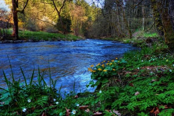 Río entre hierbas y árboles