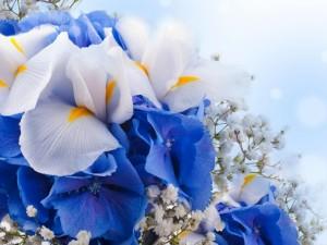Elegante ramo de pétalos blancos y azules