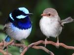 Dos pajaritos de diferente plumaje