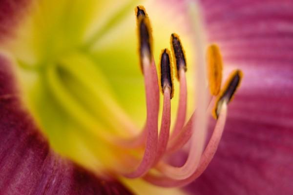 Interior de la flor