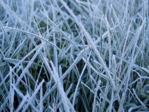 Postal: Hierba helada en un día de invierno