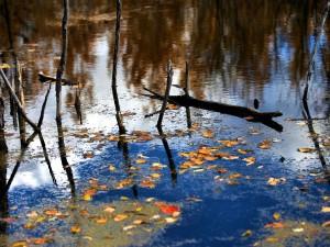 Palos y hojas en la superficie del agua