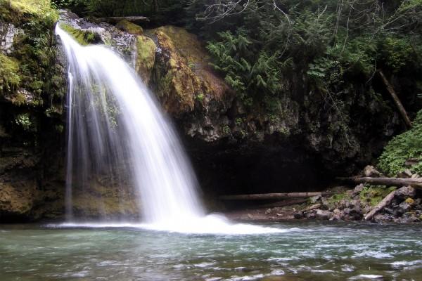 Piedras y plantas en la cascada