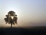 El sol en la copa del árbol