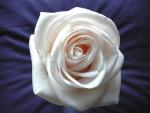 Una rosa blanca