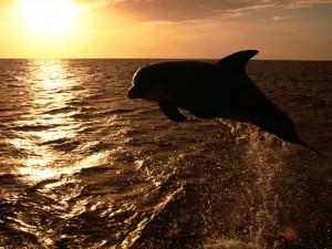 Postal: Delfín saltando al atardecer