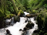 La fuerza del río en el bosque