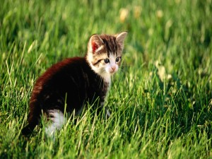 Postal: Gatito en la hierba verde