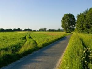 Postal: Pequeña carretera de asfalto