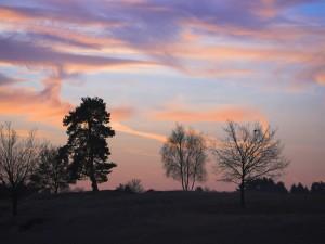 Postal: Varios árboles en el campo