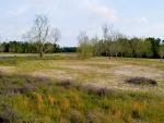 Pradera con árboles y hierbas de colores