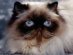 Postal: La cara del gato
