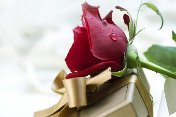 Una rosa y un regalo para el Día de San Valentín