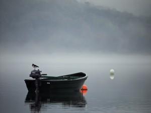 Pajarito sobre el motor de un bote